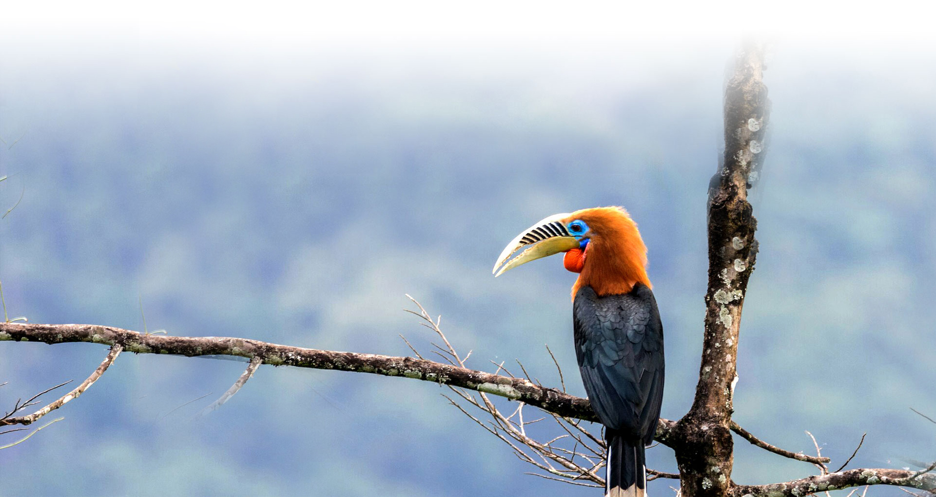 bird watching tours india